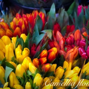 Camellia Flowers Букет 5