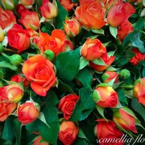 Camellia Flowers Букет 6