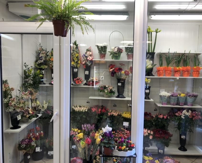 Camellia Flowers Lillepood / Магазин цветов