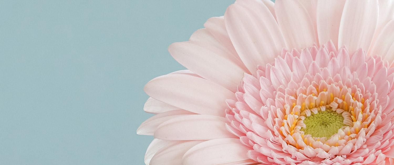 Camellia Flowers Slider 3-7