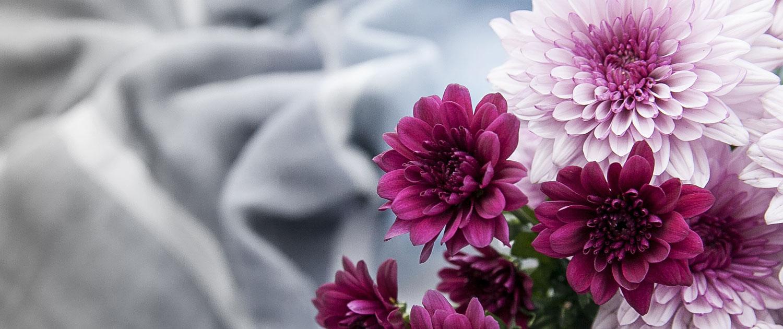 Camellia Flowers Slider 3-2