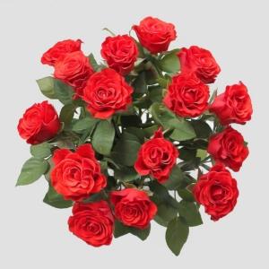 Camelliaflowers Roses Roosad Розы Tallinn