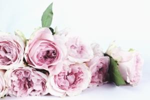 Camelliaflowers Roses Roosad Розы